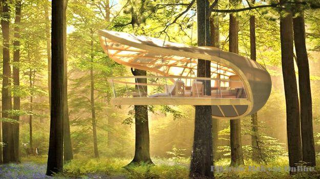 Tree House Paling Keren di Dunia