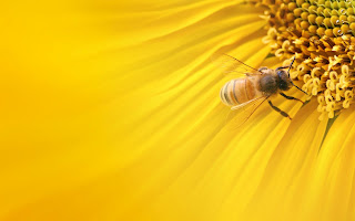 Bee Wallpapers