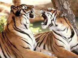 photo animals صور حيوانات