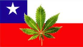 Chile e o cultivo de maconha