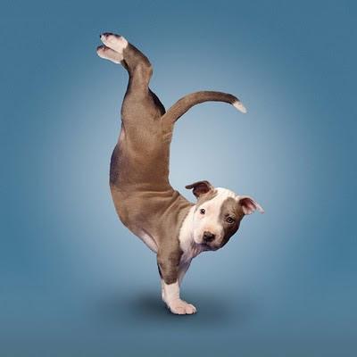Gambar Lucu Anjing Gaya Yoga