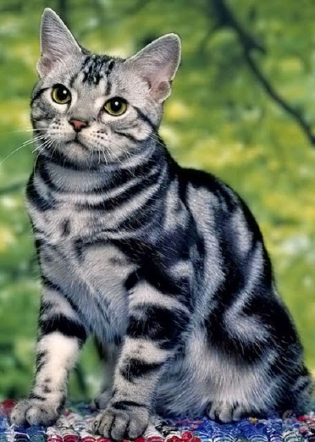Top 5 Cat Breeds for Children