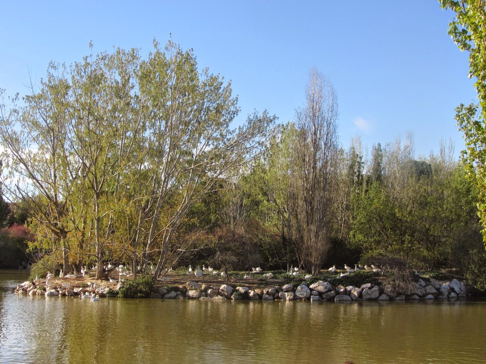 El Parque Natural El Soto dispone de más de 50 especies de mamíferos, aves o reptiles.