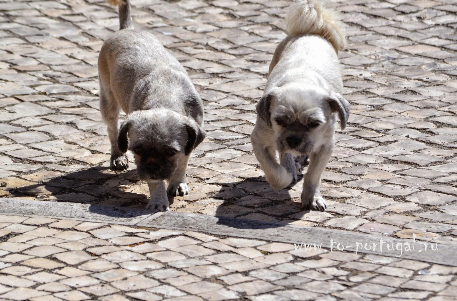 собаки в Португалии