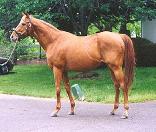 Chestnut Horses picture 1