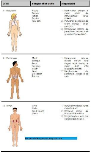 PJM3106 Anatomi dan Fisiologi : Pengenalan sistem tubuh manusia