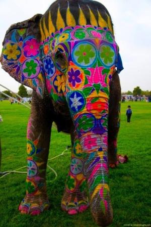 Decorated elephant face - photo#16