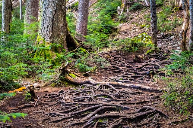 дальше путь ведёт по корням и камням