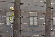 Σ.Ντρέκου: Φράχτες συρμάτινοι φαντάζουν οι αποστάσεις.-Γ.Παΐσιος: Η αγάπη καταργεί τις αποστάσεις.