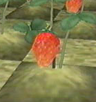 harvest moon wonderful life strawberry crop