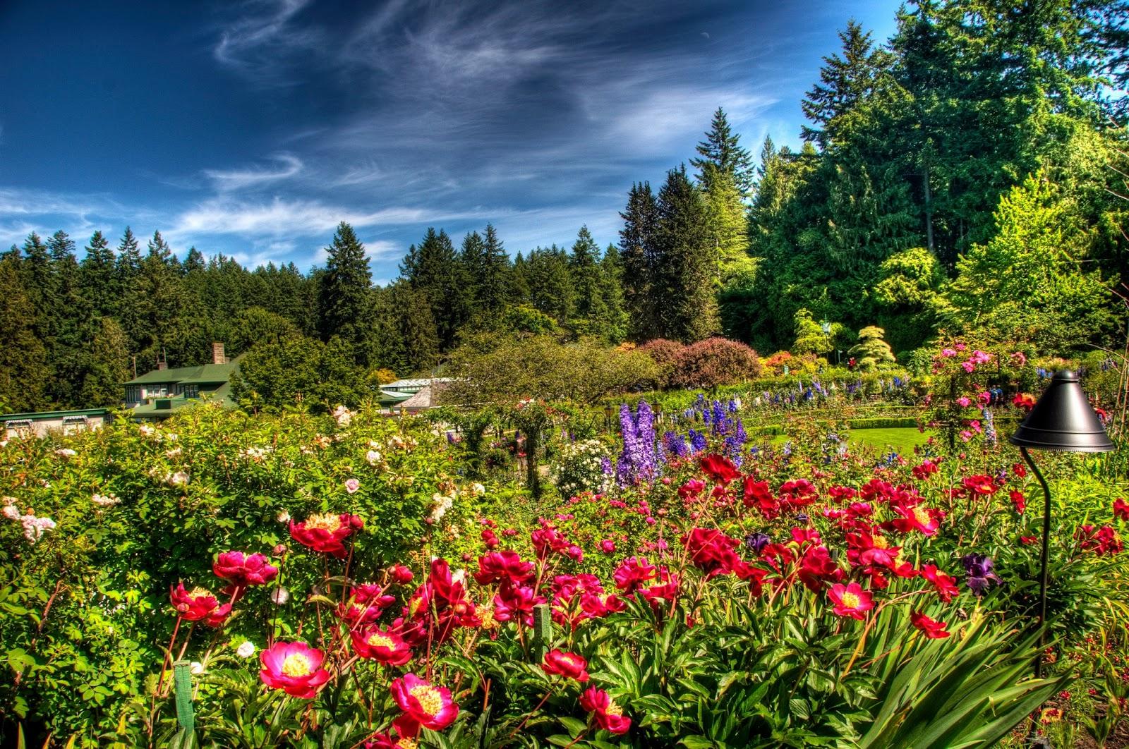 Arte y jardiner a trucos de jardiner a for Jardineria y plantas