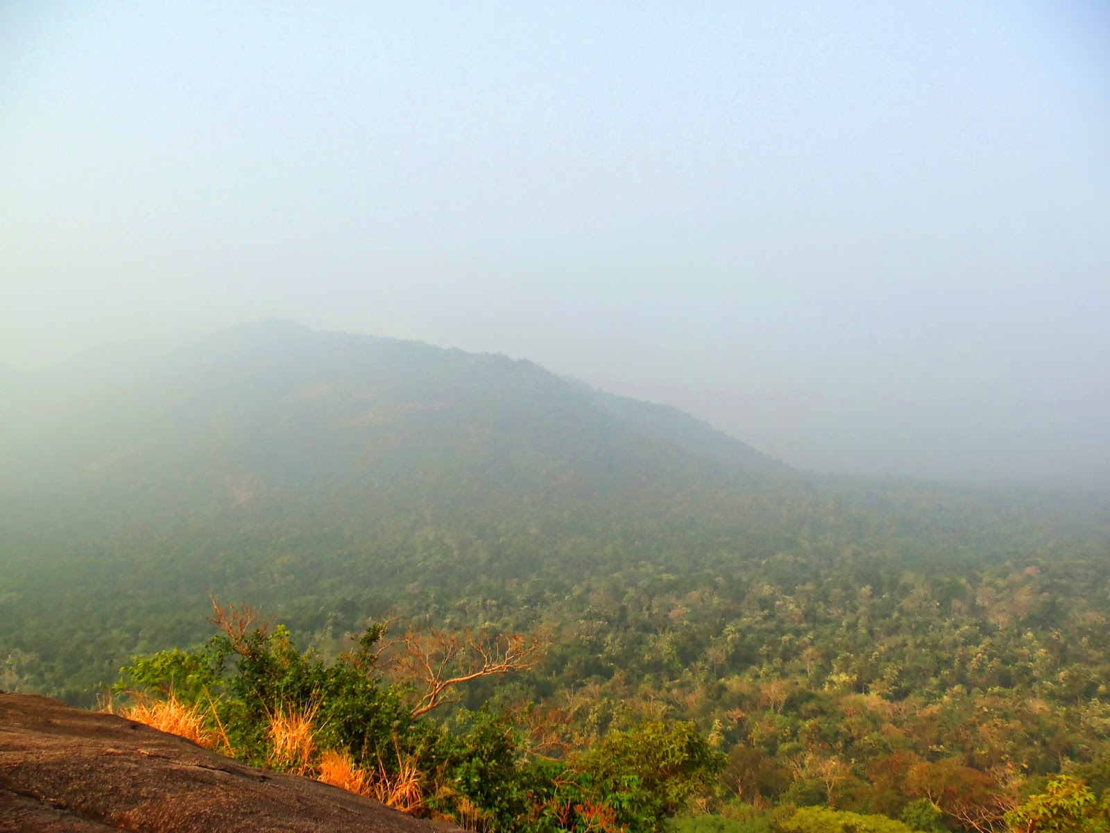 The view of the jungle from the top