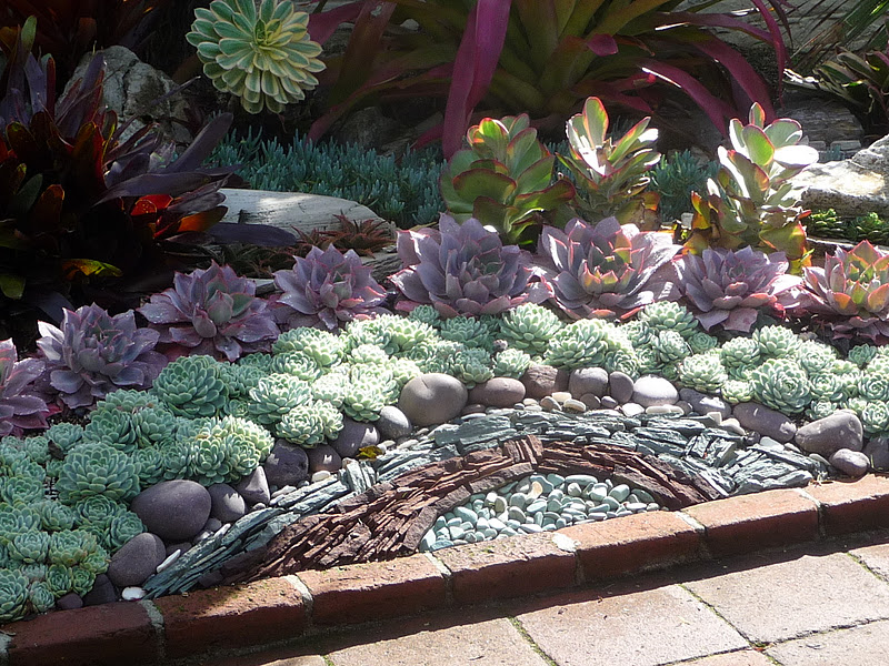 My California Garden in Zone 23 Succulents at Sherman