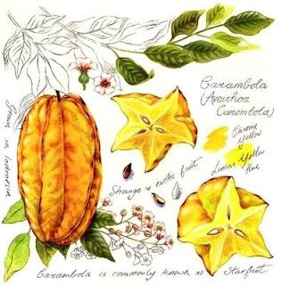 imagens para decoupage de frutas e legumes