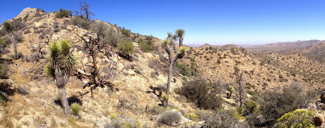View north from the eastern ridge of Warren Point, Black Rock Canyon, Joshua Tree National Park