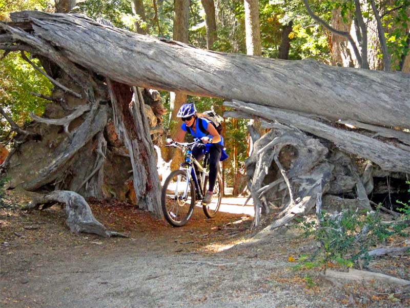 Mountain bike paths around san martin de los Andes - non fishing activities