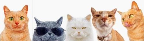 Ce que vous ne saviez peut-être pas sur les chats