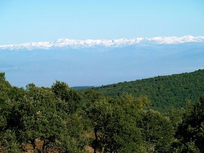 El Pirineu nevat des de sota el Bellit