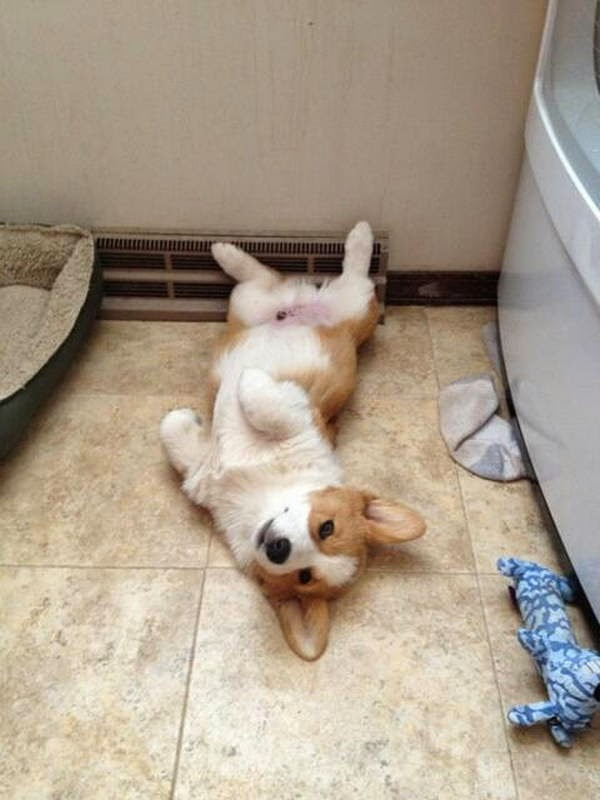 Cute dogs - part 41 (50 pics), adorable dog picture, funny dog photos