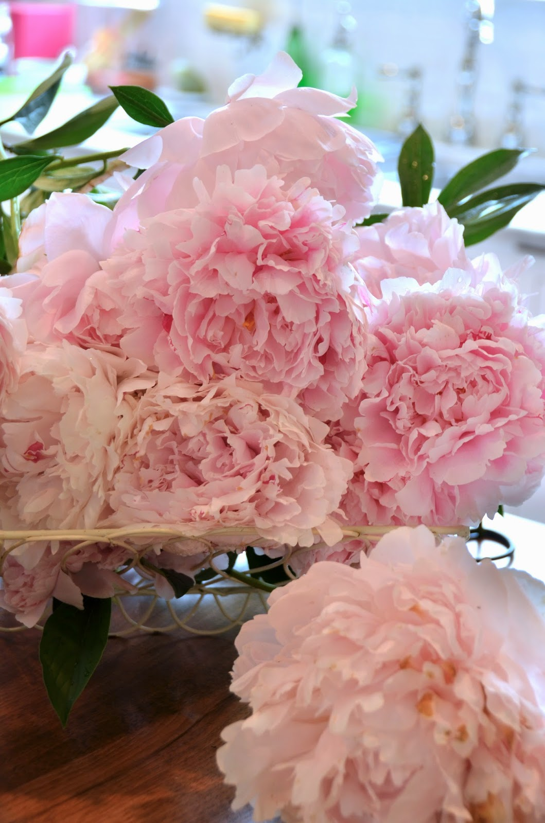 Peonies Season the princess and the frog blog: peony season