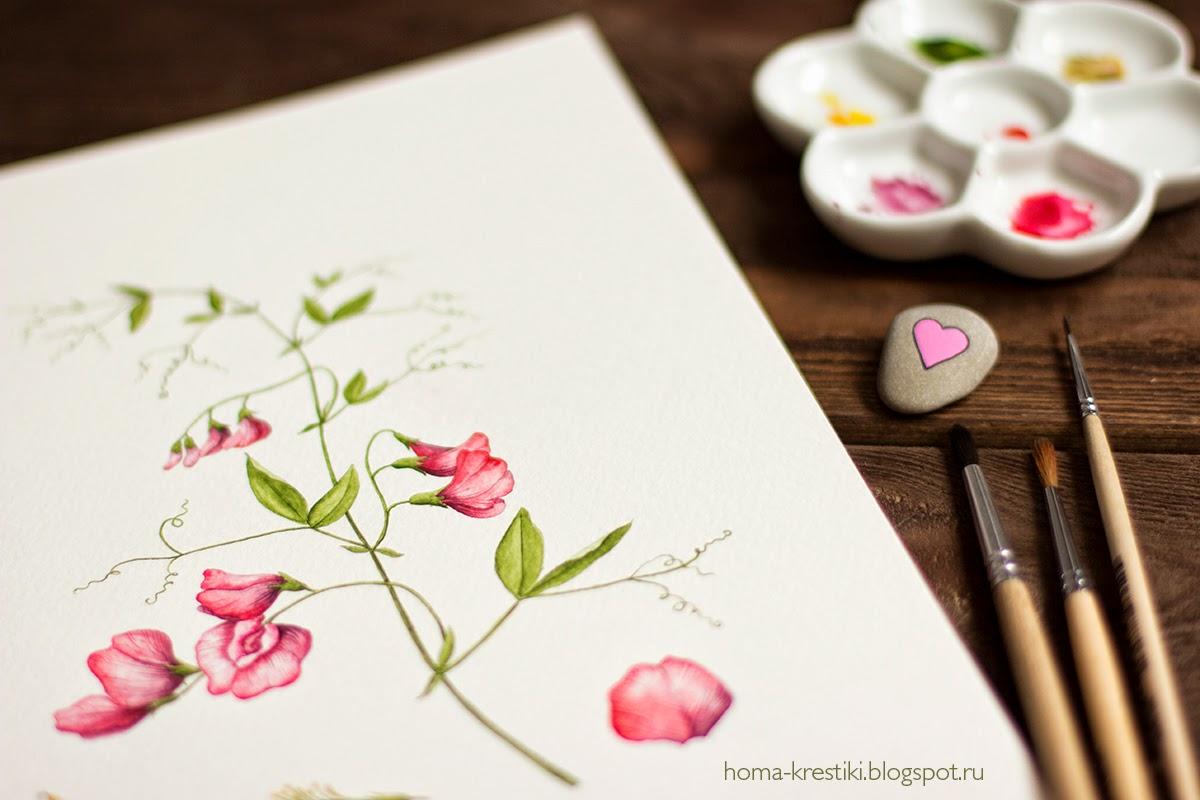 душистый горошек, акварель, watercolor
