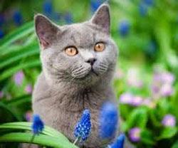 golongan darah kucing