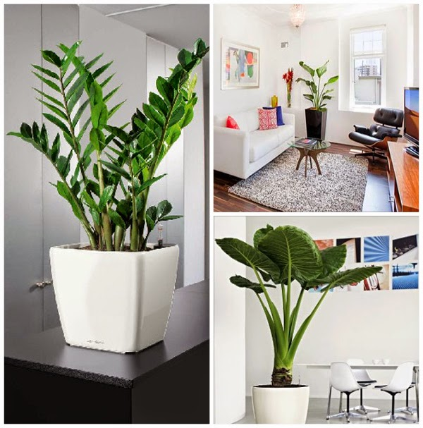 Top 10 trucuri pentru a avea cele mai s n toase plante de for Plante de interior