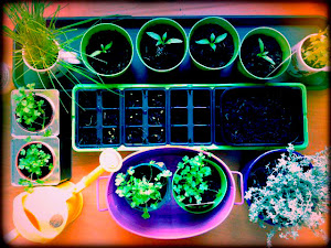 The Desktop Garden