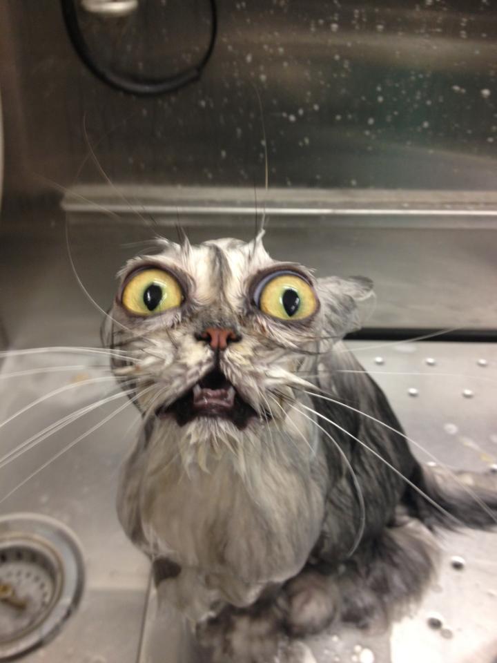 Funny cats - part 55 (30 pics + 10 gifs), funny pictures of cats, funny cats, cat photo, cat pics