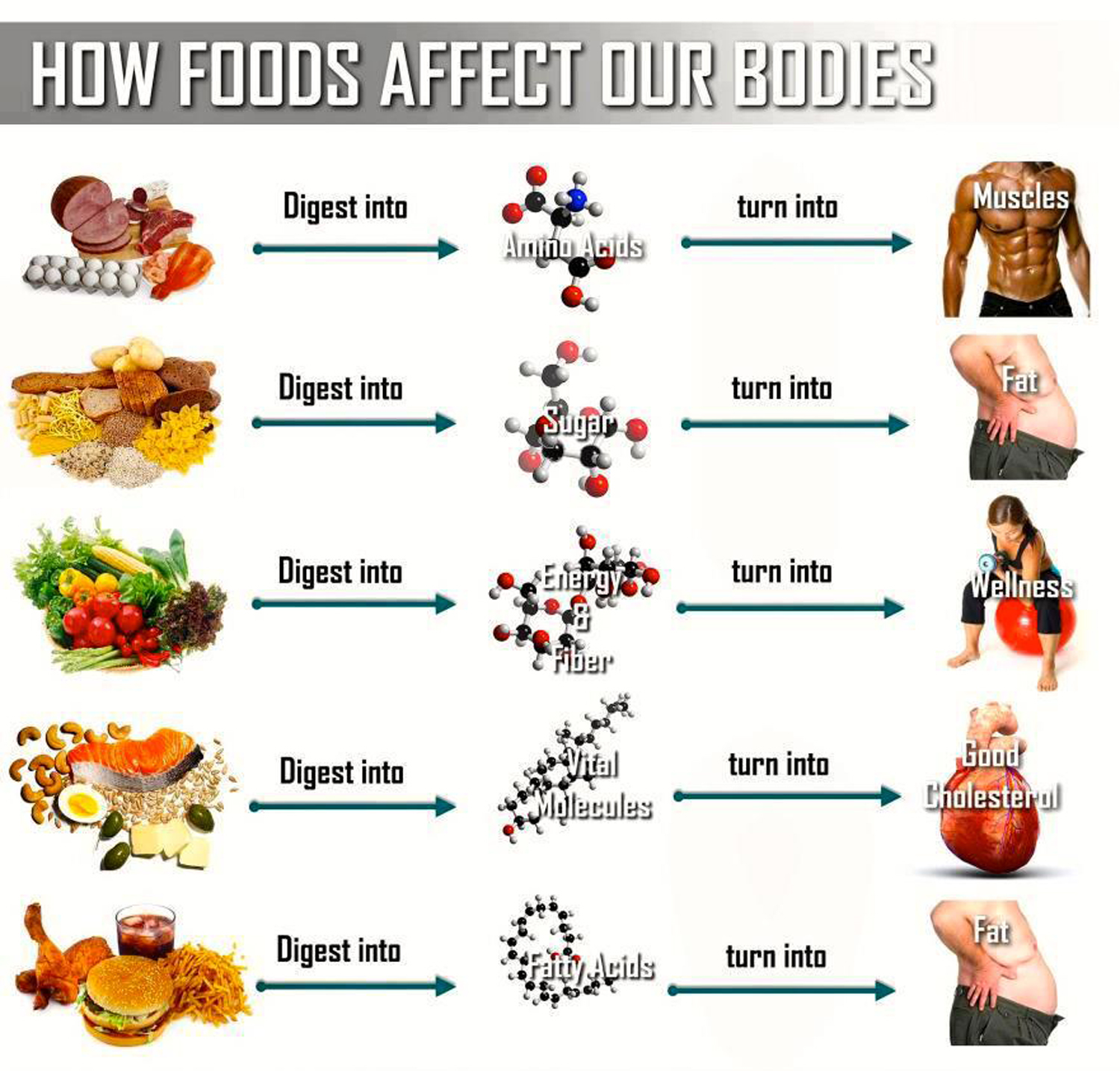 A look on diet fitness fit and ripped fit and ripped geenschuldenfo Image collections