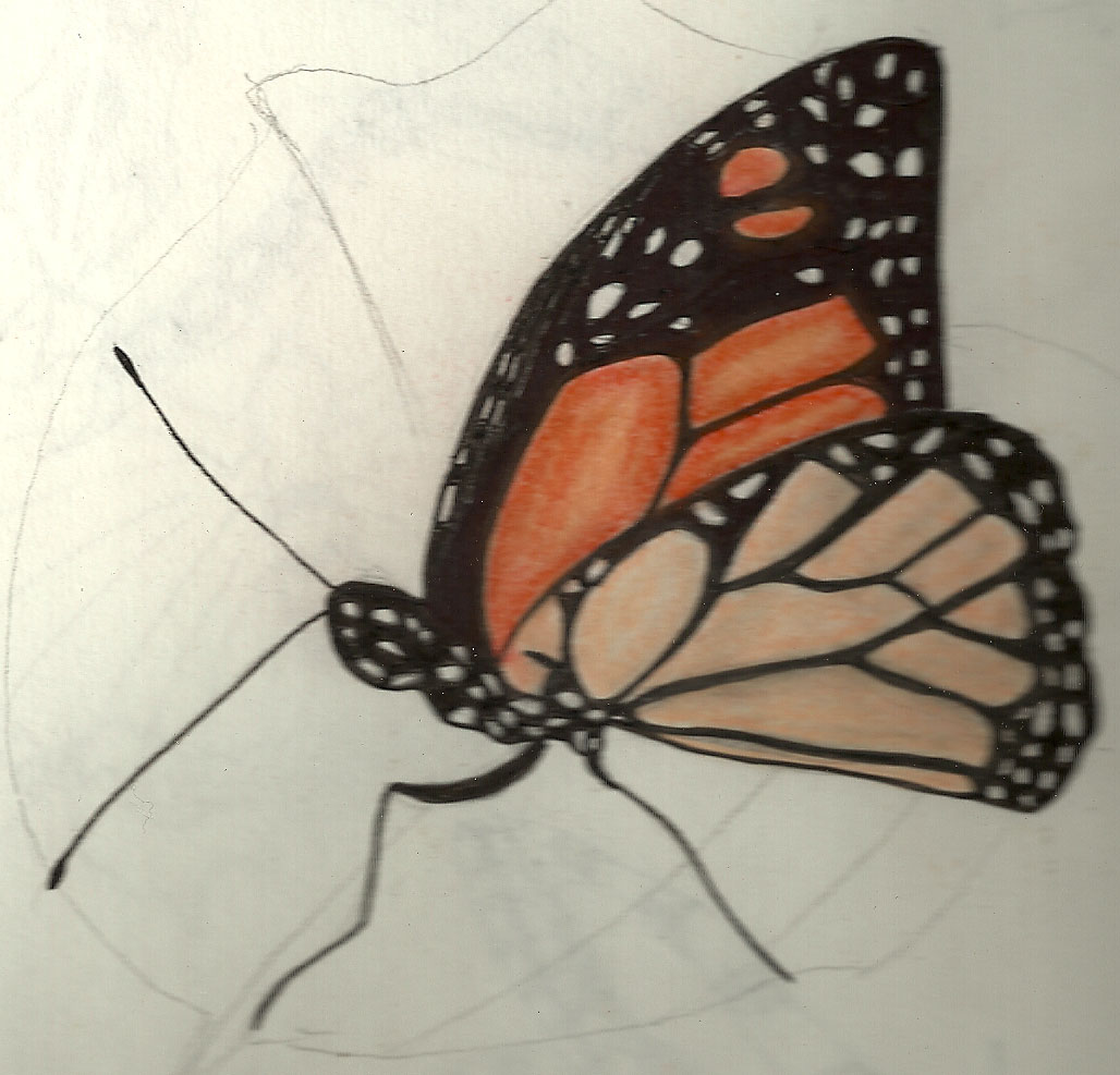 Butterfly Drawings: Mad About Print: Some Butterfly Drawings