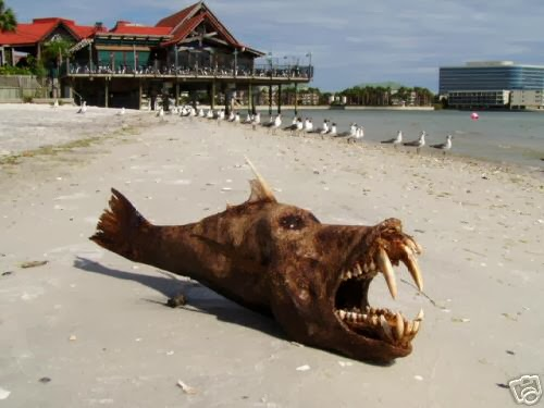 İnanılmaz deniz canavarı resimleri