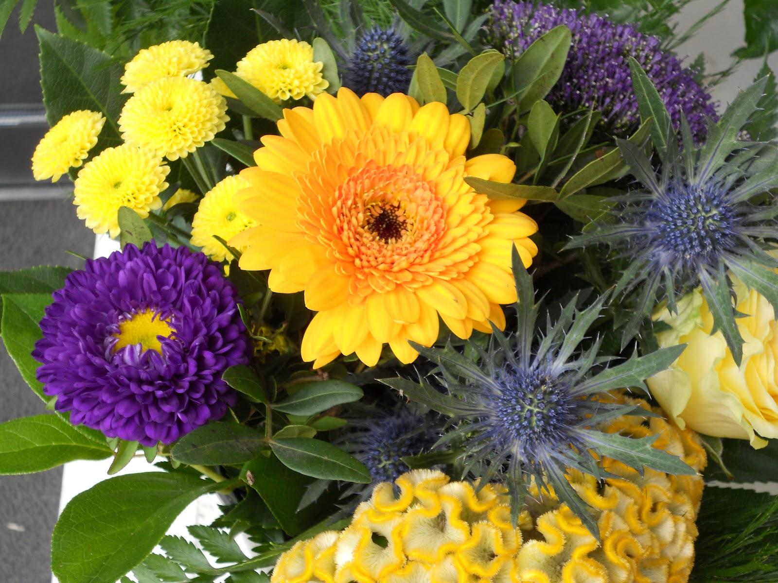 Jardineria eladio nonay eladio nonay da la bienvenida al - Jardineria eladio nonay ...