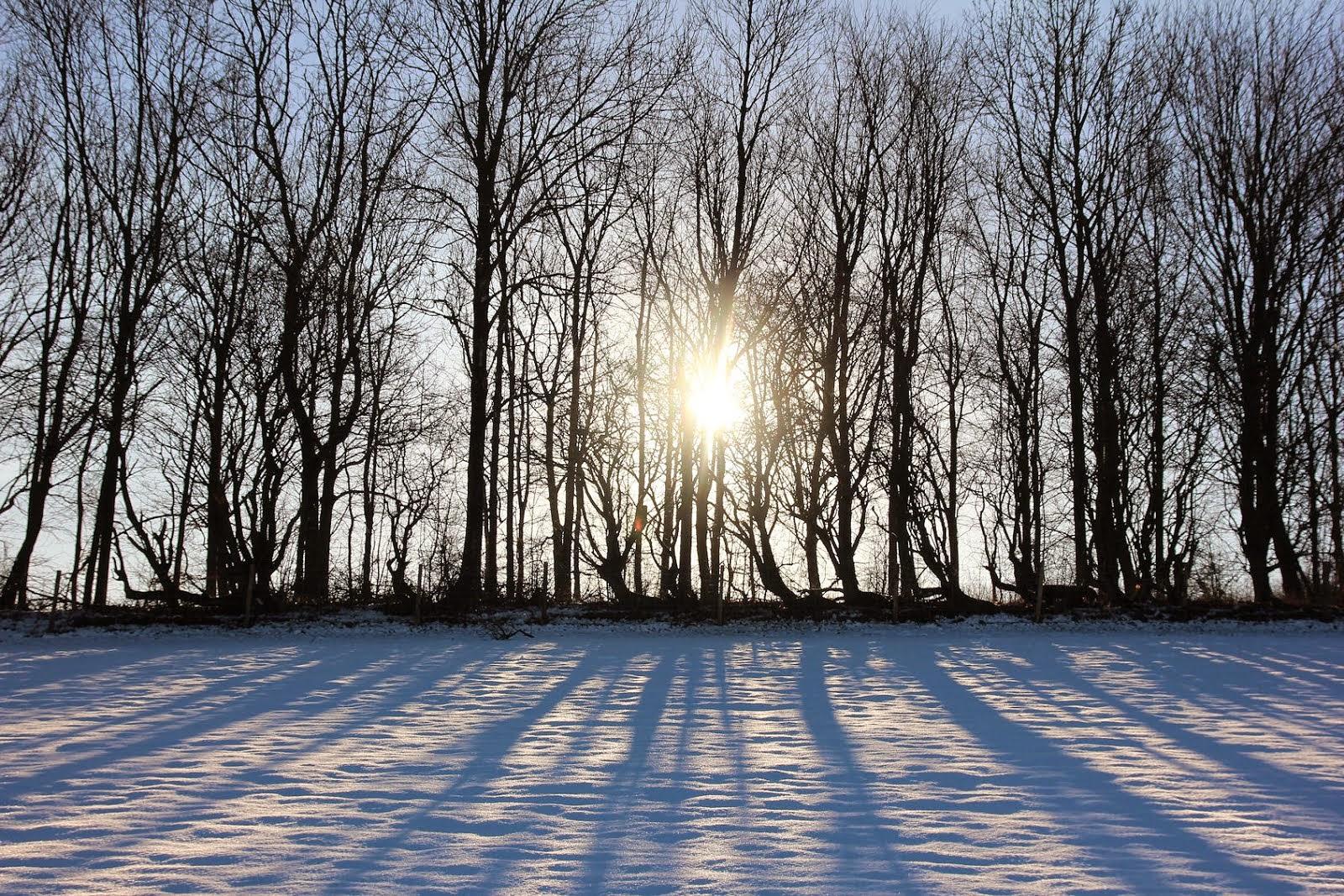 Snowy sunshine