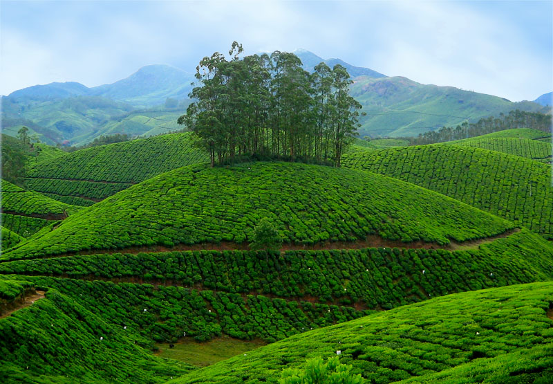 Tourism India Travel In India Holiday In India Munnar Kerala Best Place For Tourism India