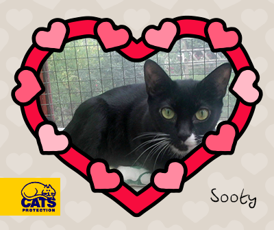 Sooty in Gosport, Hampshire