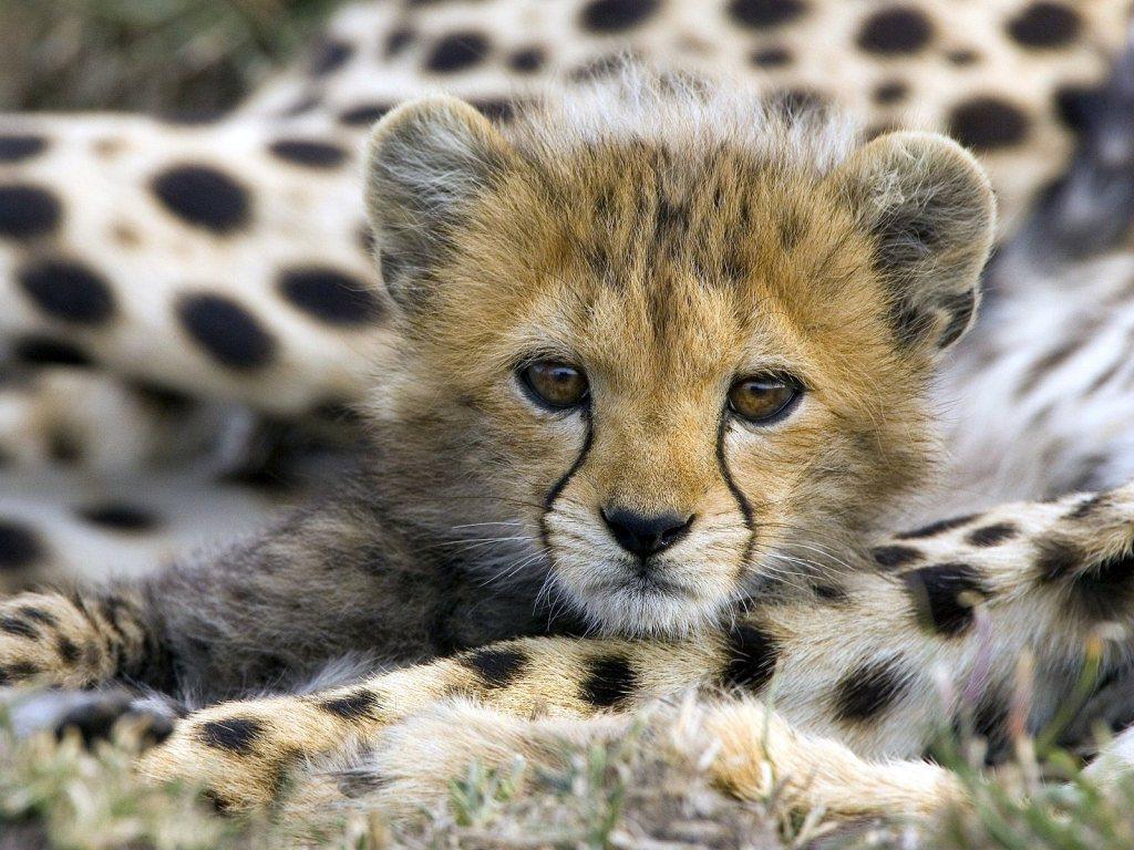 Animal Babies Wallpapers - Wallpaper World