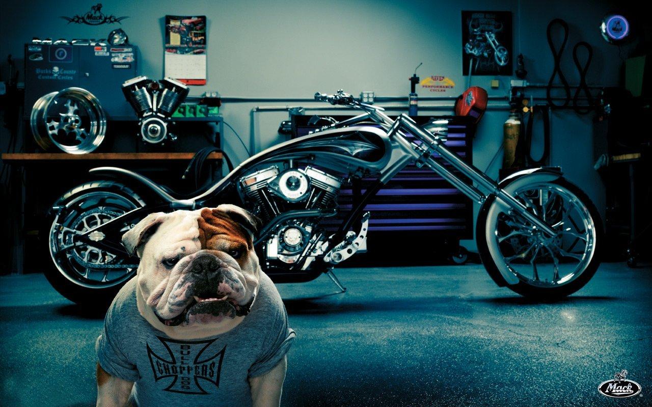 http://4.bp.blogspot.com/-sJa6VEB3fcU/UDzcLJMFPQI/AAAAAAAABEo/5Hr27MLpaXA/s1600/Bulldog-motos-custom-wallpaper-chopper%2B%255Bmoteritas.blogspot.com%255D.jpg