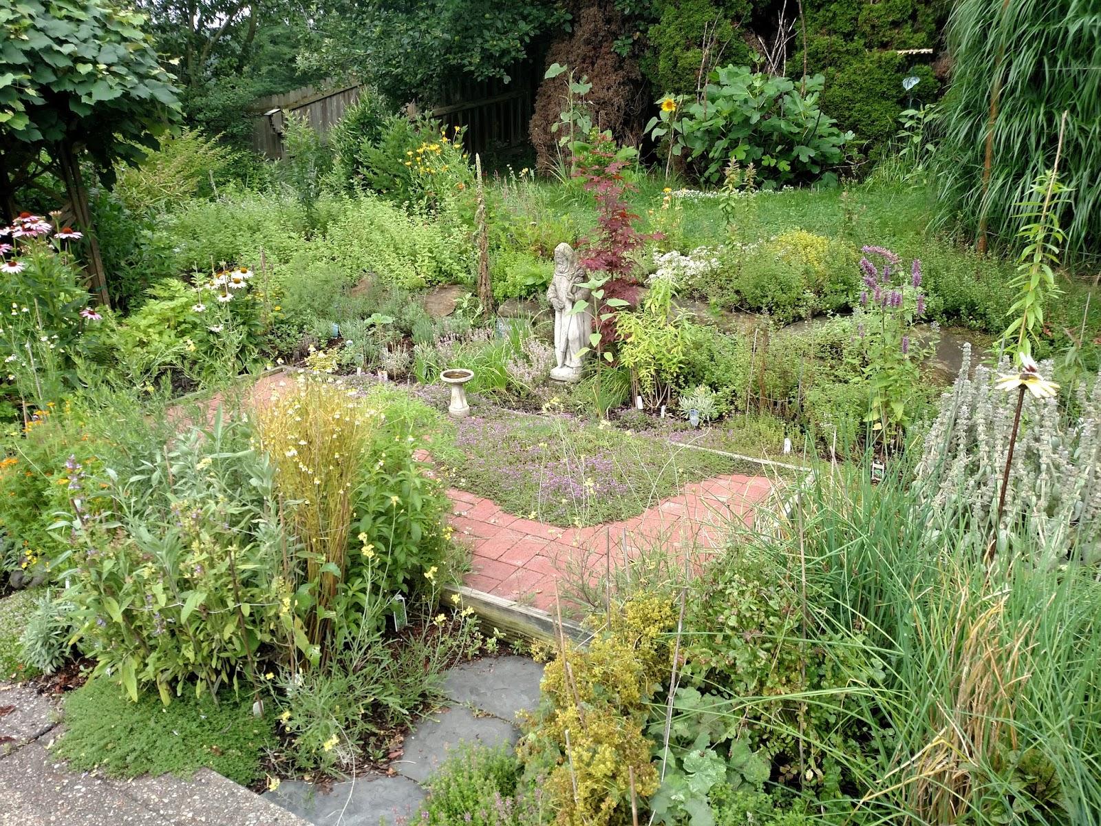 Wild Backyard Herbs : Lemon Verbena Ladys Herb Garden Havent Had Much Thyme to Blog!