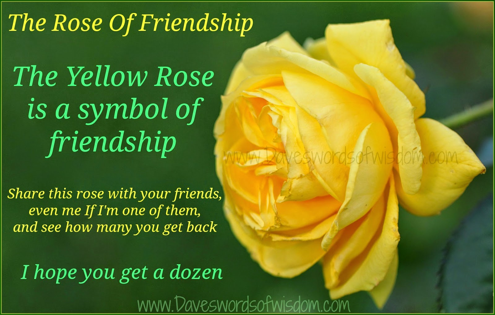 Yellow rose symbolizes image collections meaning of text symbols wisdom to inspire the soul the yellow rose of friendship mightylinksfo