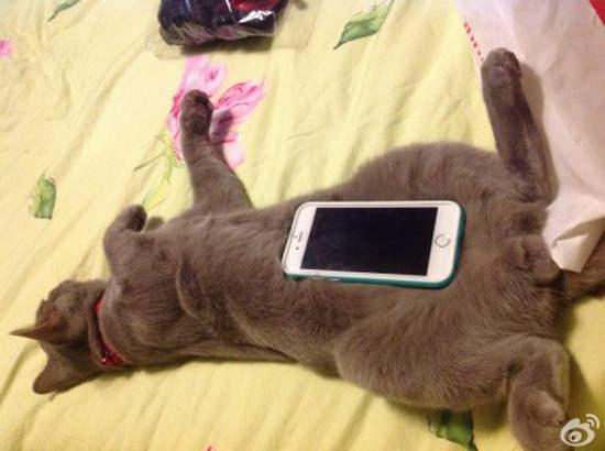 Cat Phone Cases Cutest Phone Cover Ever Meow Cat Com