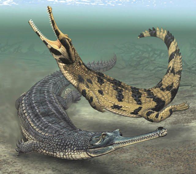 Crocodile vs alligator vs caiman vs gharial - photo#6