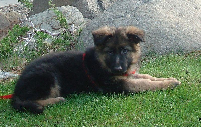 Mamy służbowego psa :-)