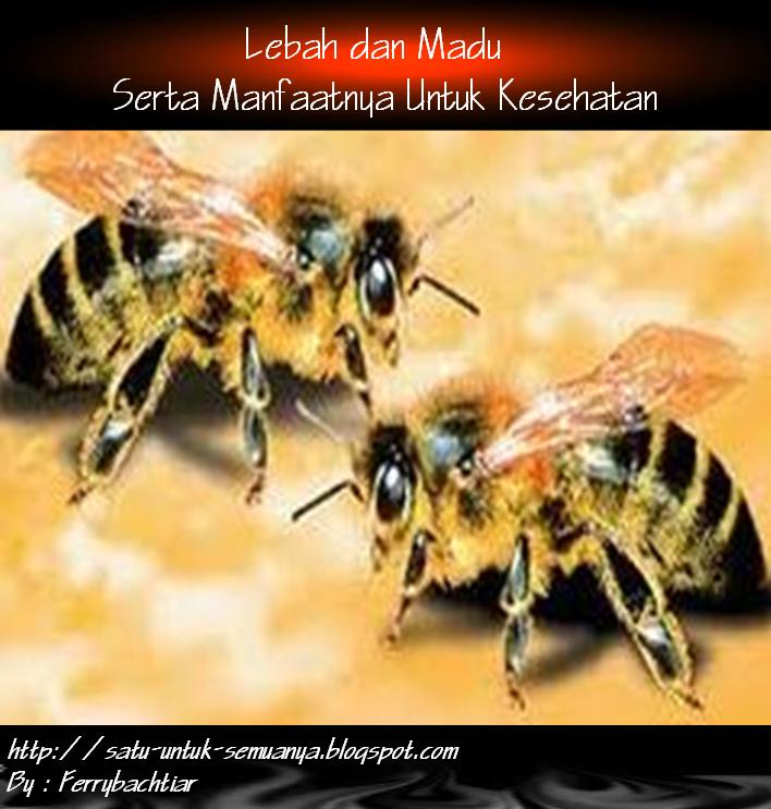 manfaat lebah dan madu untuk kesehatan manusia