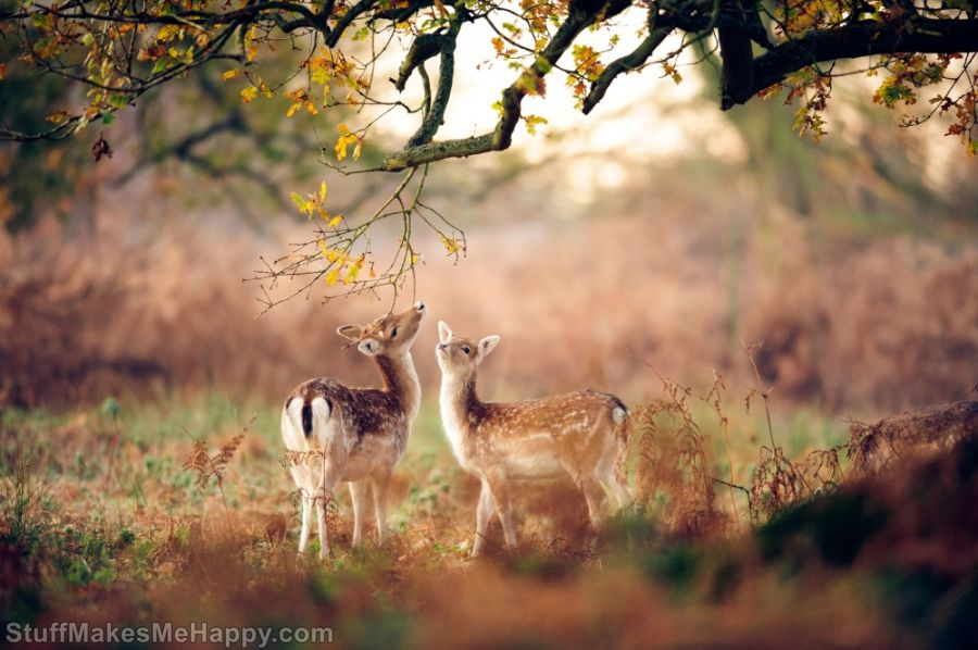 Joyful Animals Who Are Enjoying the Magic of Autumn