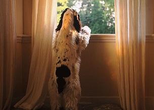 Lo lắng khi bạn vắng nhà. Nếu chó của bạn khó chịu khi bạn để lại chúng một mình trong nhà, dạy cho chúng rằng bạn sẽ luôn luôn trở lại. Lúc đầu, để chúng lại một mình chỉ 5 hoặc 10 phút. Tránh xa hơn một chút mỗi lần đi ra ngoài. Cho chúng một món đồ chơi nhai. Chúng sẽ bình tĩnh khi bạn đi vắng và biết rằng ở một mình là OK.
