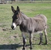 Unique Indian Donkey ( UID) Relegated to Developing Backend Work