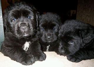 Cachorros, parte 3