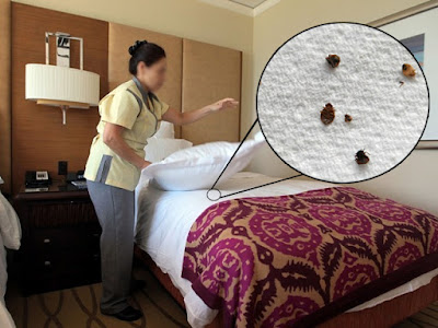 bedbugs humans live alongside coexist