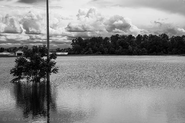 Bijeljina alluvione Bosnia